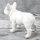 """Spardose Hund """"Bulli"""" französische Bulldogge Höhe 15cm aus Keramik weiß"""